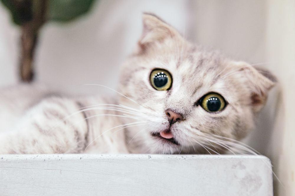 Vad krävs för att öppna kattpensionat?