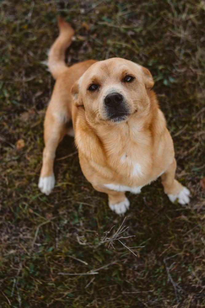 Husdjuren förtjänar en bra veterinärklinik