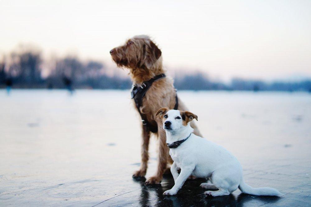 Billiga hundburar för olika hundar och bilmodeller