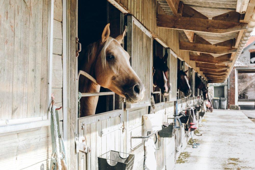 Därför behöver hästen en utebox